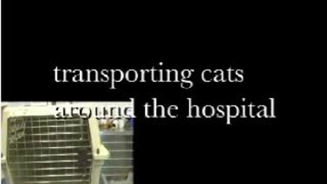 Thumbnail for entry Feline Transport