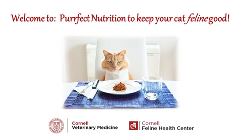 "Thumbnail for entry Purrfect Nutrition to keep your cat ""feline"" good! virtual webinar"
