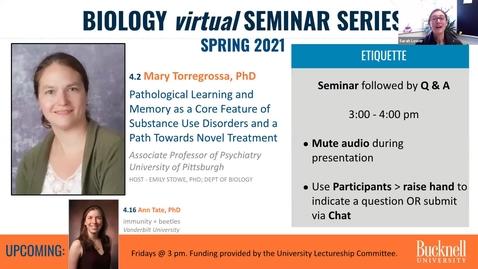 Thumbnail for entry Biology Seminar Series Spring 2021: 4.2 Mary Torregrossa memory + addiction
