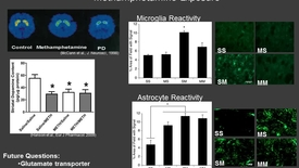Thumbnail for entry Microglia and Astrocyte Reactivity in Repeated Methamphetamine Exposure