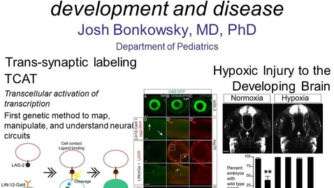 Thumbnail for entry Studying Brain Connectivity Development and Disease