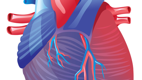 Thumbnail for entry Transcatheter Aortic Valve Replacement—Is It Right For Me?