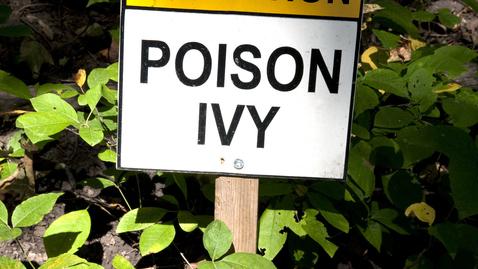 How Do I Treat Poison Ivy?