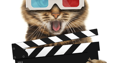 Thumbnail for entry Watching Cat Videos Could Expand Your Life Expectancy