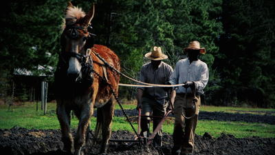 What Happened To The Forty Acres And A Mule? by Dr. Bobby Mills