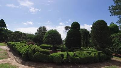 Pearl Fryar S Topiary Garden Palmetto Scene Knowitall Org